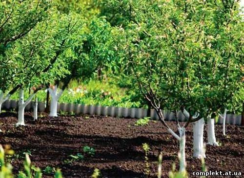 Планировка участка При посадке яблоневого сада выбор того или иного варианта размещения яблонь зависит от местных...